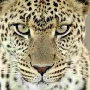 Leopard Loans Services